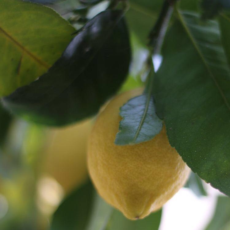 villa tina lemons